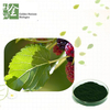 Natural Factory Supply Top Quality Pure Extract Powder Chlorophyll 99%