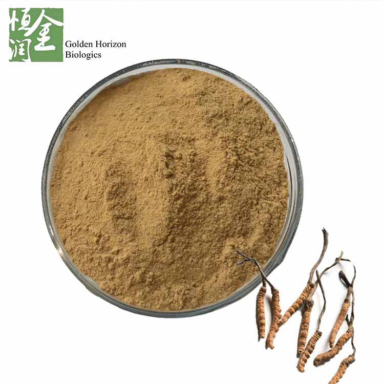 Natural Cordyceps Sinensis Extract Powder