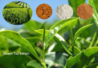 Green Tea Extract Market to Be Driven by Growing Health Consciousness Among Consumers