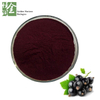 Black Currant Extract 5% Anthocyanins Anticancer Fruit